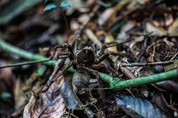 Un farmaco contro la paura dei ragni       (Photo credit should read CHRISTOPHE SIMON/AFP/Getty Images)