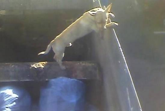 Cane buttato nel camion della spazzatura mentre il compattatore è in funzione