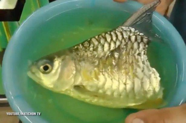 Trova pesce a metà a ancora vivo fonte youtube