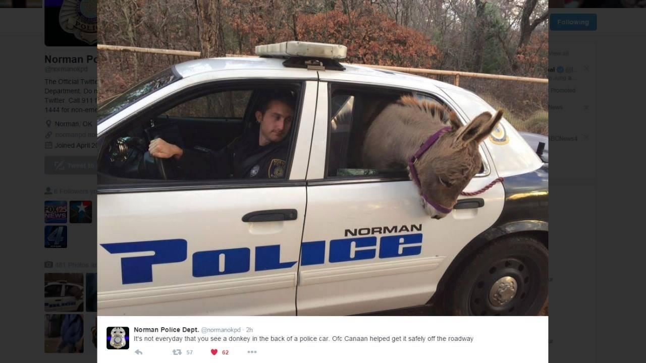 La polizia 'arresta' un asino. Ecco il motivo
