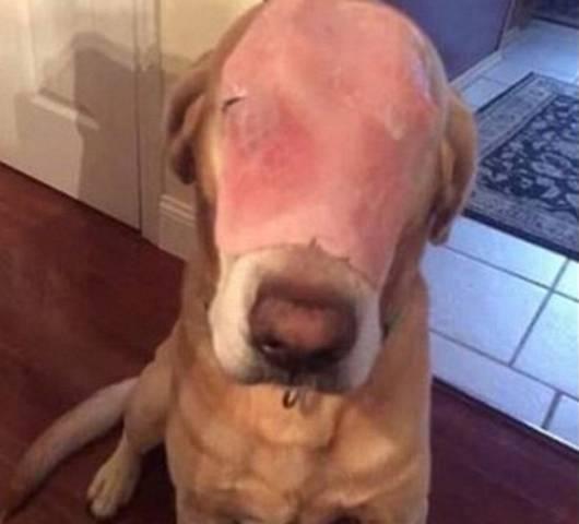 cane prosciutto