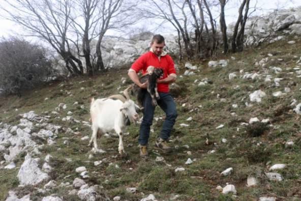 Danilo Palmieri con la capra e i neonati (foto Facebook)