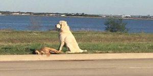 Investito e lasciato sul ciglio della strada, l'amico cane lo veglia