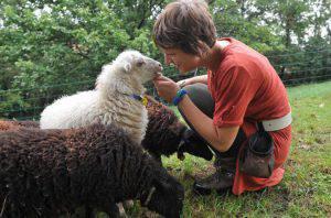 Silvia pecore