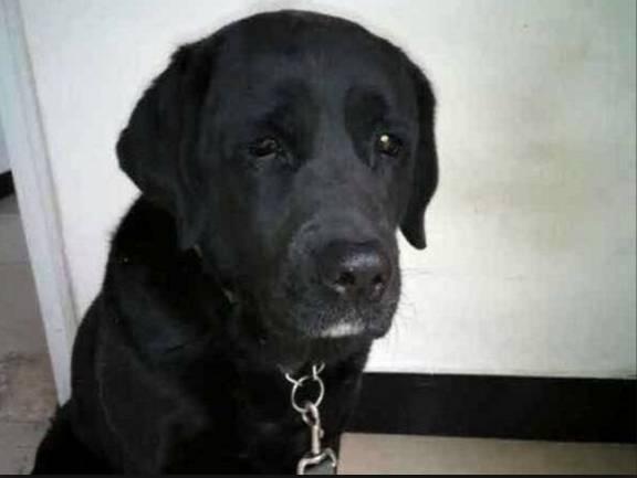 Cane rapito per essere mangiato, ecco che fine ha fatto