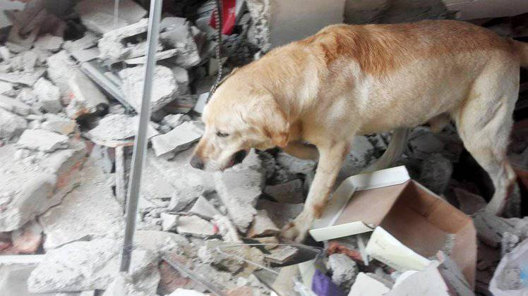 Il cane eroe Dayko fonte Metro