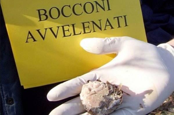 Bocconi avvelenati (foto dal web)