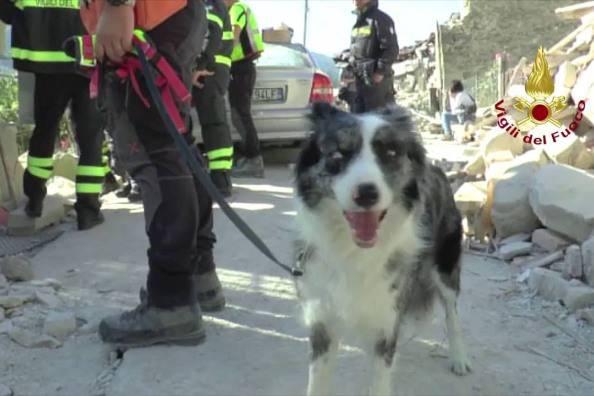 Cane tra le macerie (foto Vigili del fuoco)