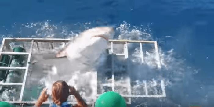 Lo squalo entra nella gabbia del sub: ecco le terribili scene VIDEO