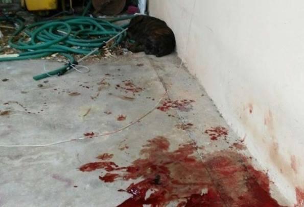 Cane azzanna donna e anziano a Velletri, vigili costretti a sparare