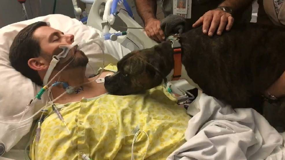 Il padrone sta morendo in ospedale, l'ultimo saluto del cane è straziante