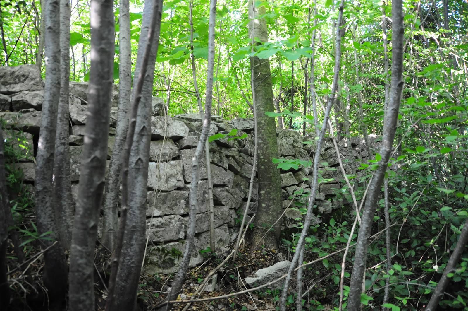 C'è qualcosa nei boschi, poi la drammatica scoperta