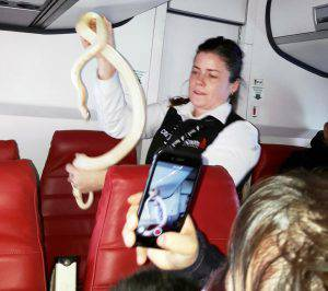 serpente libero