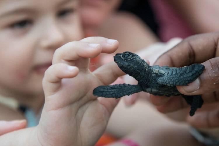 A contatto con una tartaruga marina, neonato rischia la vita
