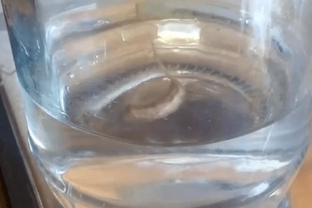 Bevono l'acqua dal rubinetto e trovano un disgustosa sorpresa