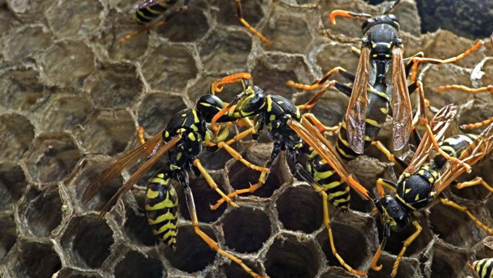 Attaccato da sciame di vespe: grave bimbo di 14 mesi