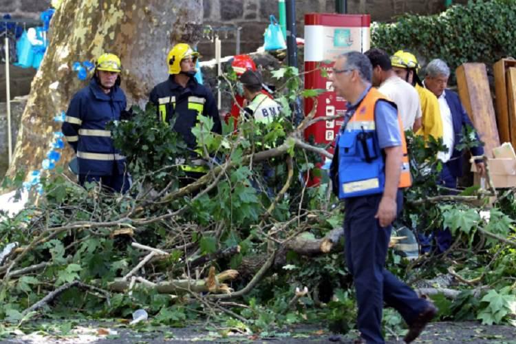 Cade un albero durante la festa patronale: è una strage