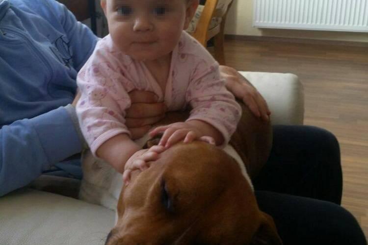 Bambina di un anno azzannata e uccisa da due pitbull