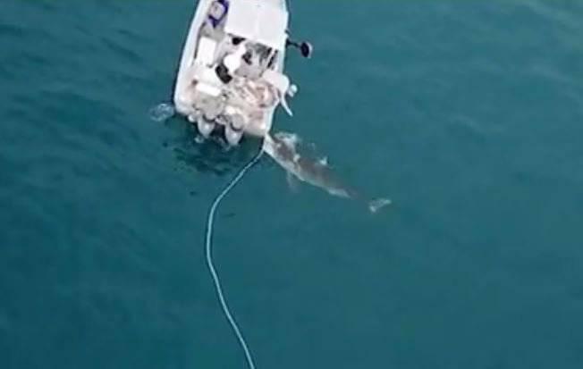 Uscita a pesca da horror: un enorme squalo attacca la barca – VIDEO