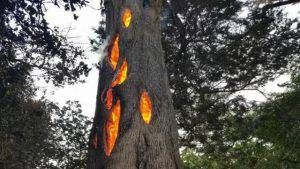 """albero """"del diavolo"""""""