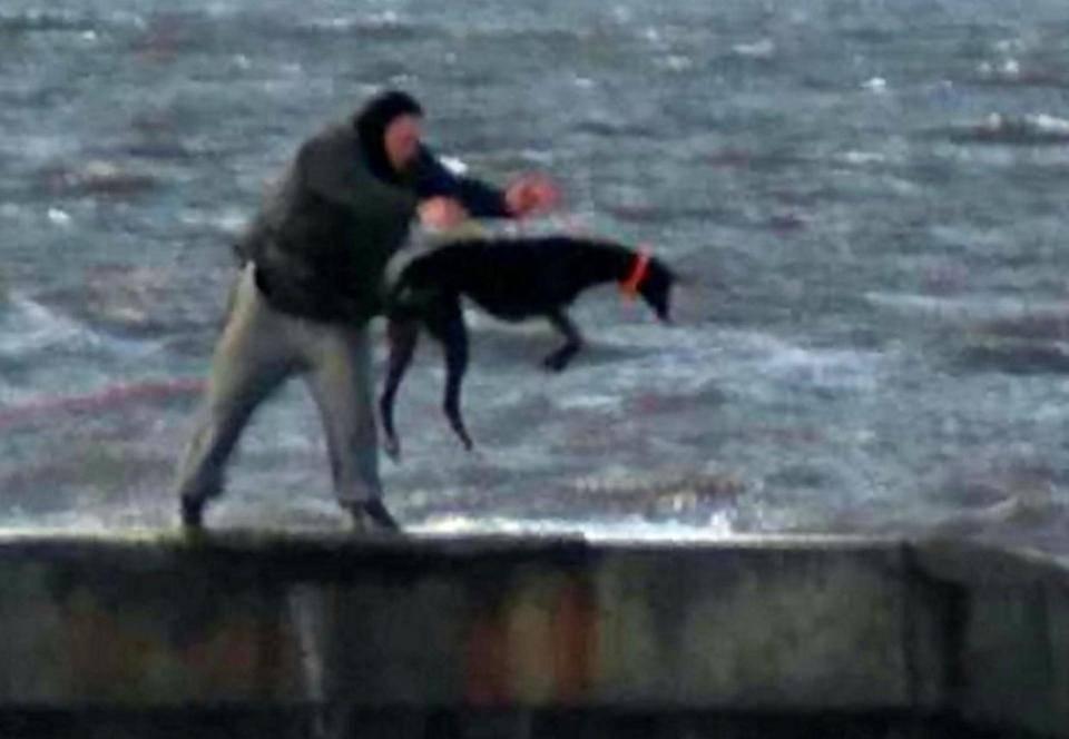 cane gettato in mare