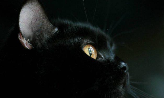 Giornata di apprezzamento del gatto nero, cos'è e dove si festeggia