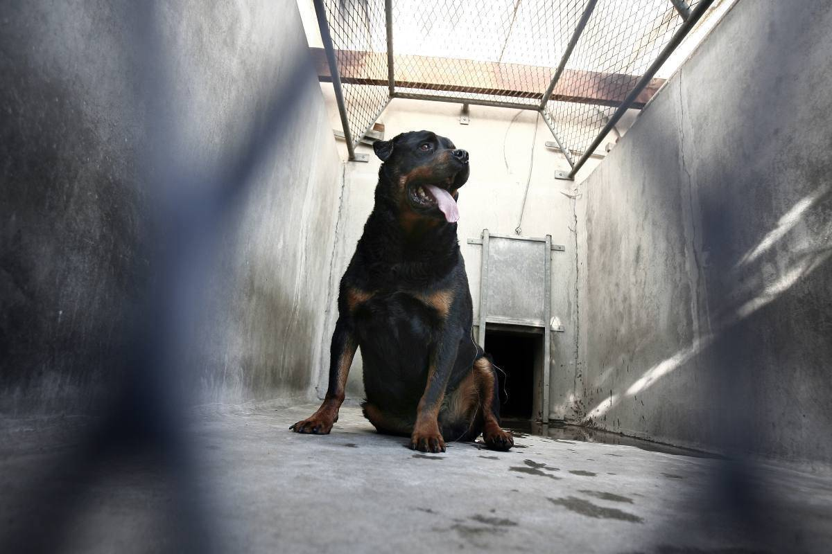 Rottweiler (Getty Images)