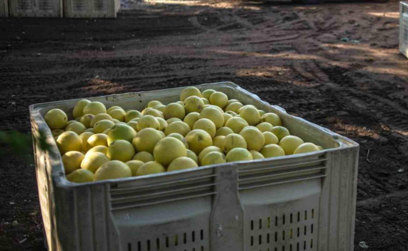 Siracusa limoni spagnoli cancerogeni sequestrati