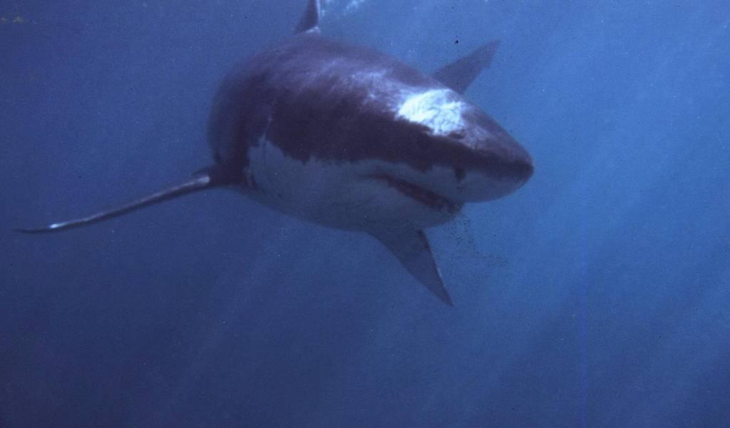 La Reunion: quindicenne vittima dell'attacco di uno squalo