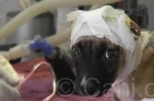 BOLZANO – Cane salve il suo padrone cieco dalle fiamme