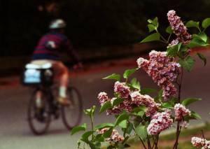 I pollini, tra le principali cause di allergia (Getty Images)