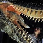 Patagonia. Paleontologi trovano il dinosauro più grande del mondo (VIDEO)