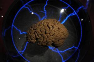 Cervello Umano (Getty Images)