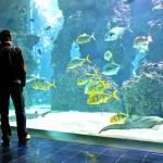 Acquario di Genova: ecco come pagare di meno il biglietto di ingresso