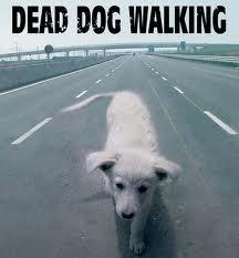ANIMALI / Maltrattamento, abbandona cane malato legandolo a un palo sotto al sole