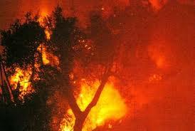 Incendi, Fao lancia sistema monitoraggio sviluppato Nasa