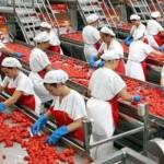 Pomodori cinesi, contraffazione del made in Italy: a Parma sequestrate 220mila buste di concentrato