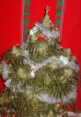 Frohe Weihnachten Jacopo Fo Buone Notizie Ecologia