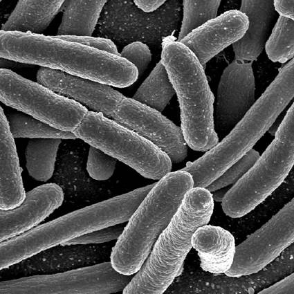Il batterio E.Coli fa paura all'Europa