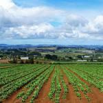 Agricoltura e camorra: business di 7,5 miliardi.