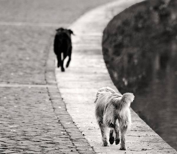 Catania, pecore dilaniate: crolla l'ipotesi della pantera, le ricerche puntano ad un branco di randagi