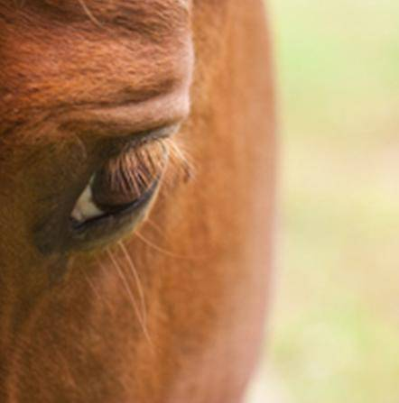 Giulianova: cavallo fugge per recarsi sulla tomba del defunto padrone