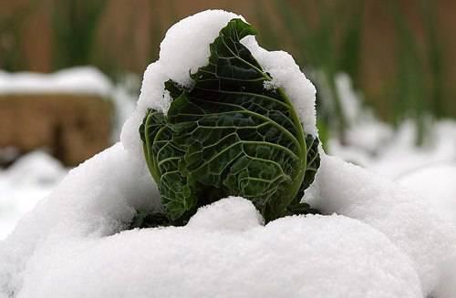 Neve Nord: trasporto e agricoltura i settori più colpiti. Danni per 10 milioni di euro