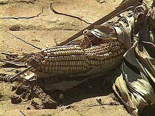 Onu lancia allarme sull'aumento dei prezzi alimentari: pericolo per 80 paesi