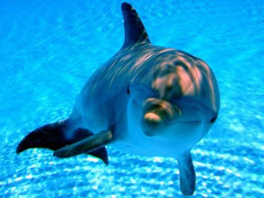 Delfino eccitato tenta un atto sessuale con una ragazza a bordo vasca (video YouTube)