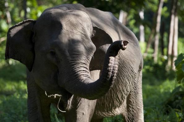 Roma, elefante a spasso sul Grande raccordo anulare (GUARDA VIDEO)
