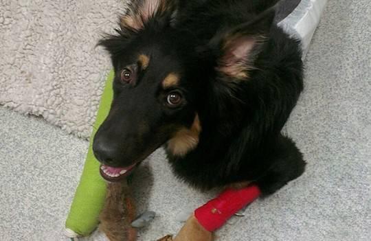 INCREDIBILE: cane salva bambino di 10 anni e si fa investire al suo posto!!!