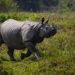 TURISMO / India, Parco nazionale di Kaziranga: viaggio nel regno degli unicorni