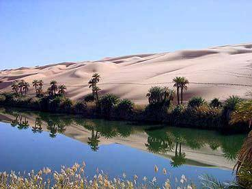 Deserto Del Sahara Scoperta Una Colonia Di Api Rimaste Isolate Dal