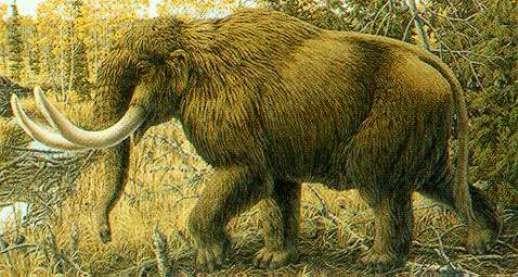 SCIENZA / Mammut, nuova ipotesi sull'estinzione: colpa del cambio di clima dopo l'era glaciale